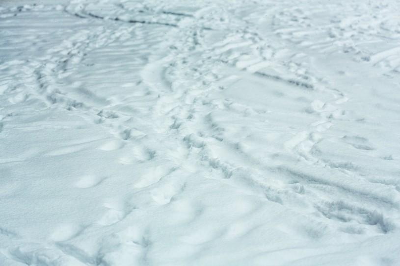 就職氷河期の年齢、特徴